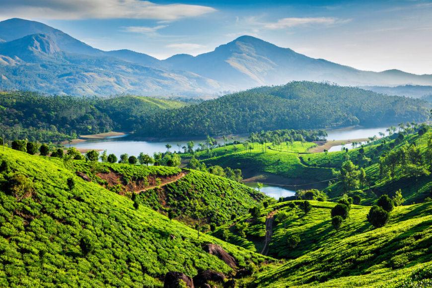 Das Landschaftsbild dagegen ist grün: Tee- und Gewürzgärten.