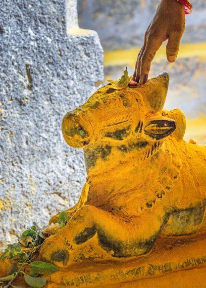 Am Tempeltor liegt eine heilige Kuh aus Stein. Auch sie wartet darauf, mit pulverisiertem Kurkuma überschüttet zu werden.