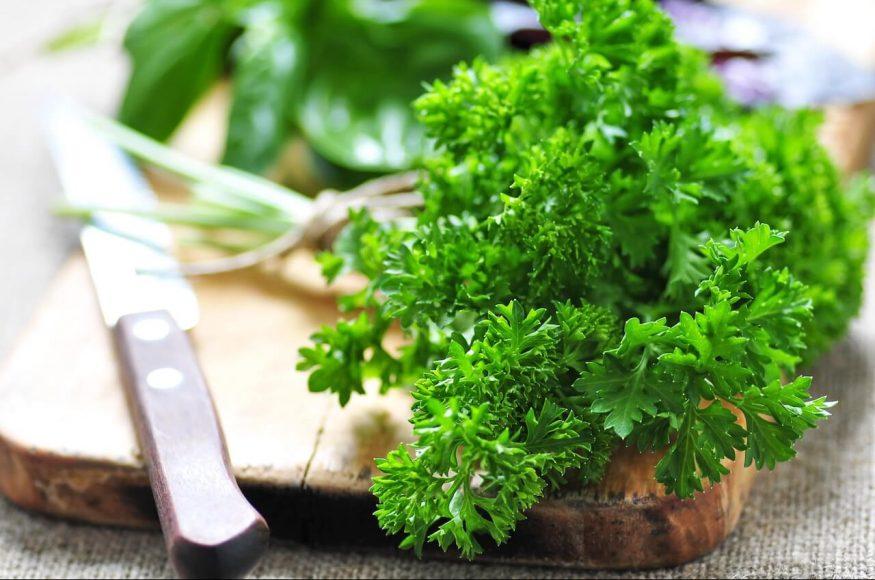Die krause Gartenpetersilie ist eine Züchtung, um eine Verwechselung mit der giftigen, wildwachsenden Hundspetersilie zu vermeiden.