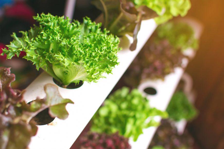 Beim Urban, Indoor oder Vertical Farming wachsen die Pflanzen übereinander - und ganz nah beim Verbraucher.